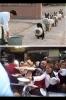 hayvanlar ile insanlar arasındaki farklar