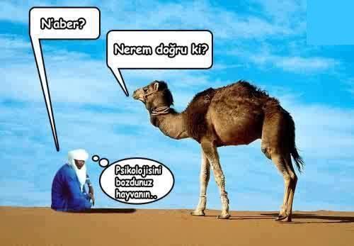 deveye sormuşlar resim ile ilgili görsel sonucu