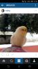 muhabbet kuşunun ölmesi