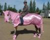 sözlük atlarının fotoğrafları