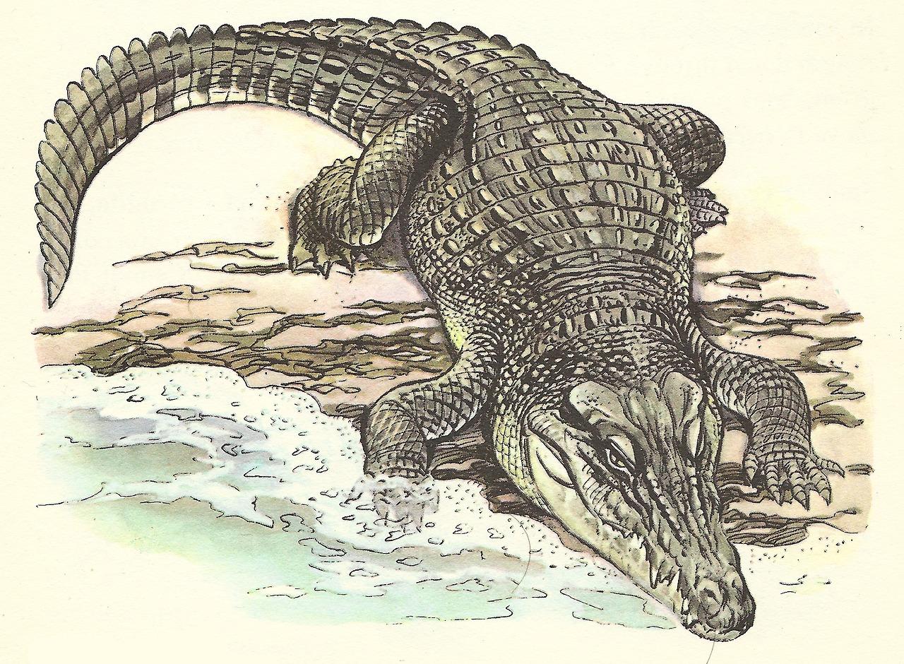 Картинки с крокодилами рисунки