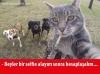 kedi vs köpek