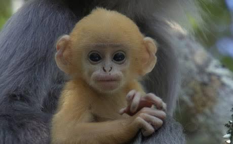 Eleştirilmeyen Maymun Fotoğrafi Uludağ Sözlük