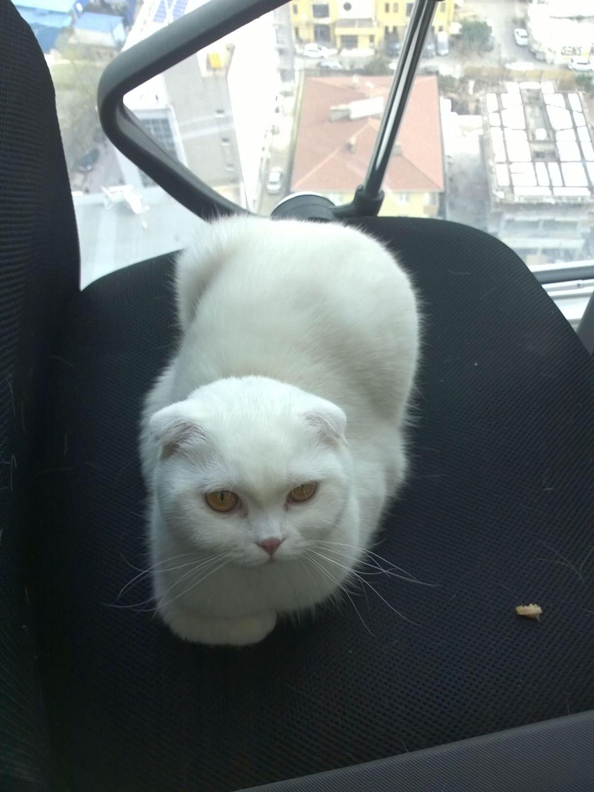 sokak kedisi besleyen varoş