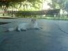 sokak kedisi